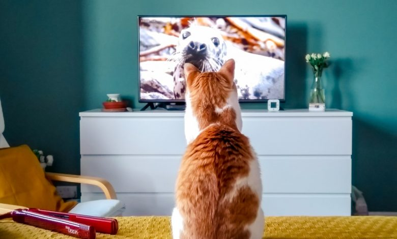Your TV will take you to another world
