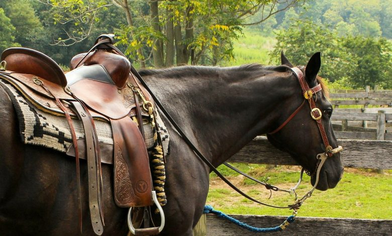 Saddle and stirrup are the best combination